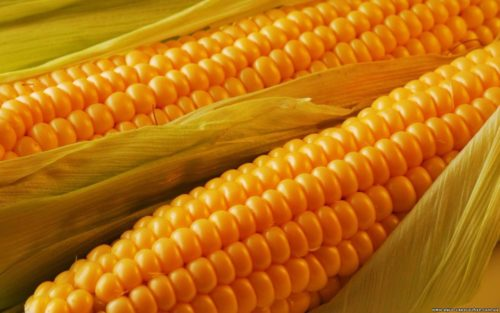 кукуруза4