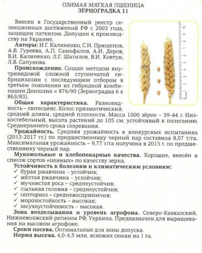 Семена озимой пшеницы4