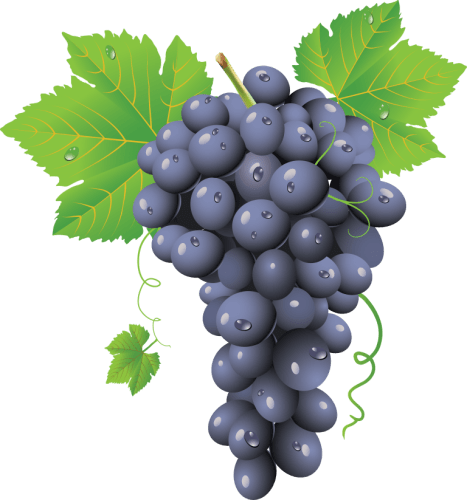 Grape-PNG-Image-768x8234