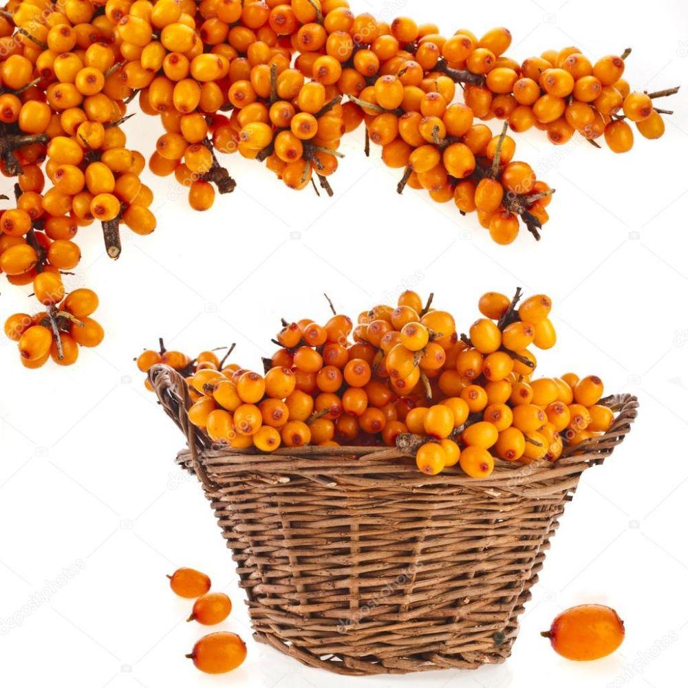 depositphotos_57289729-stock-photo-sea-buckthorn-berries