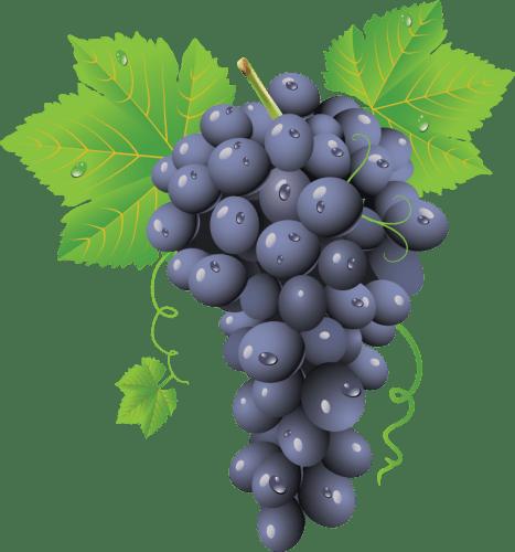 Grape-PNG-Image-768x823